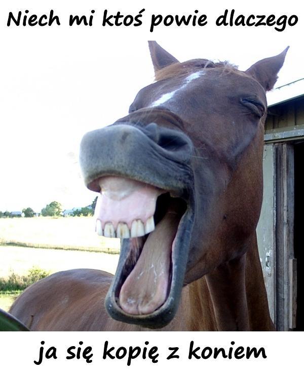 Niech mi ktoś powie dlaczego ja się kopię z koniem...