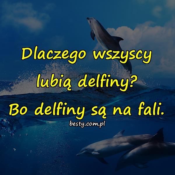 Dlaczego wszyscy lubią delfiny? Bo delfiny są na fali.