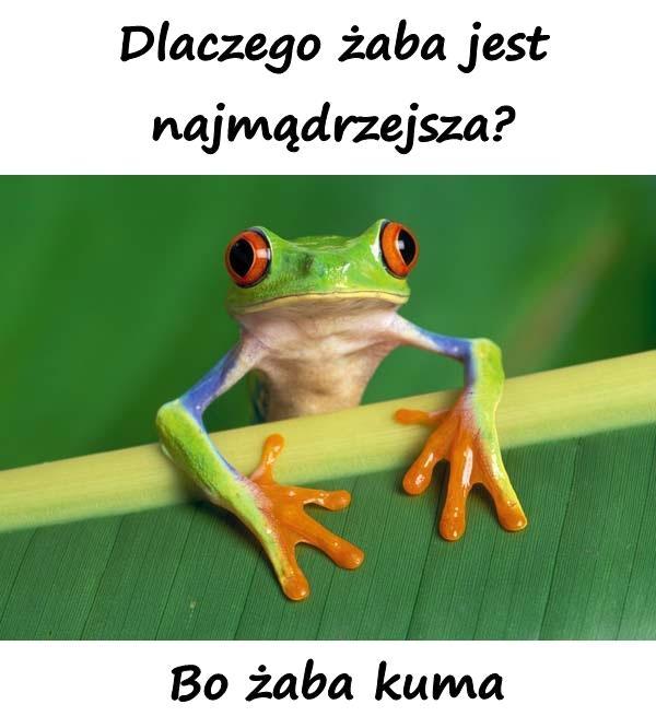 Dlaczego żaba jest najmądrzejsza? Bo żaba kuma