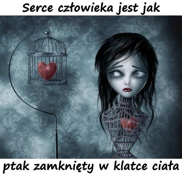 Serce człowieka jest jak ptak zamknięty w klatce ciała.
