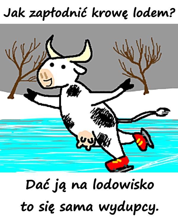 Jak zapłodnić krowę lodem? Dać ją na lodowisko to się sama wydupcy.