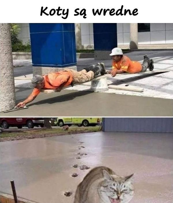 Koty są wredne