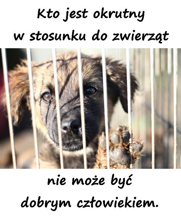 Kto jest okrutny w stosunku do zwierząt nie może być dobrym człowiekiem.