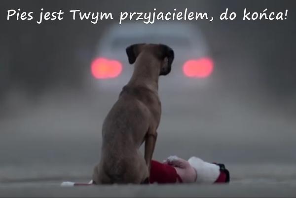 Pies jest Twym przyjacielem, do końca!