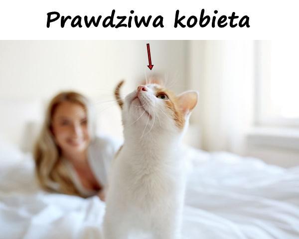 Kot Besty śmieszne Obrazki śmieszne Besty 1742