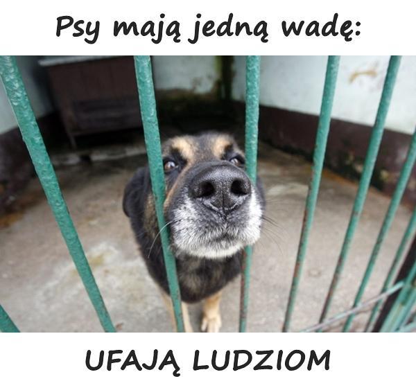 Psy mają jedną wadę: UFAJĄ LUDZIOM