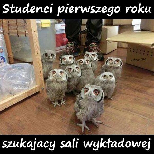 Studenci pierwszego roku szukający sali wykładowej