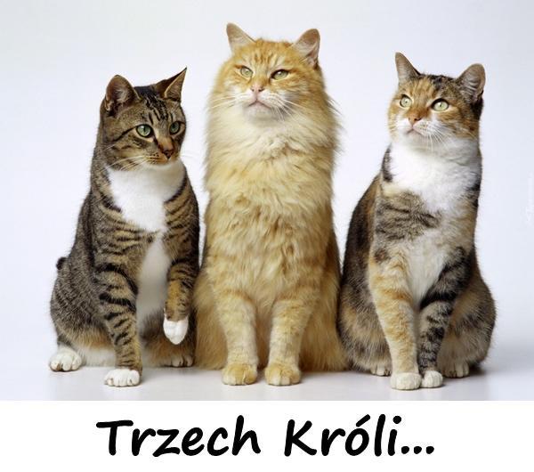 Trzech Króli...