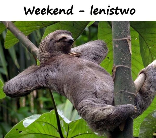 Weekend - lenistwo