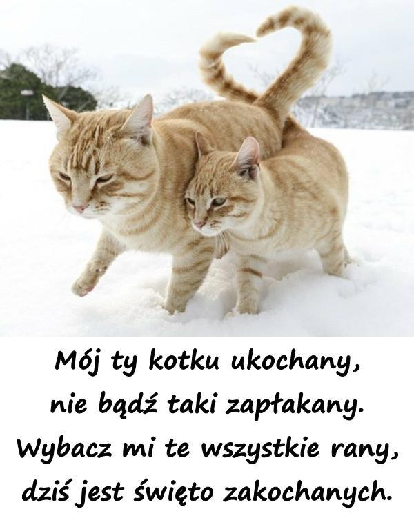 Mój ty kotku ukochany, nie bądź taki zapłakany. Wybacz mi te wszystkie rany, dziś jest święto zakochanych.